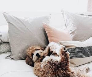 animal, animals, and bed image