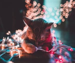 adorable, kittens, and photography image