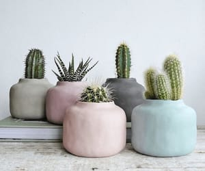 plants, aesthetic, and cactus image