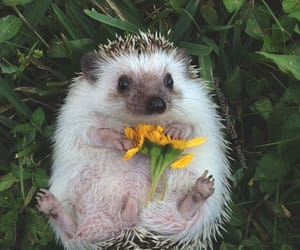 hedgehog, flowers, and animal image
