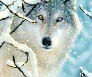 beauty, wild, and snow image