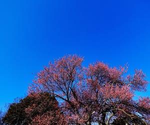 日本, 青空, and 木々 image