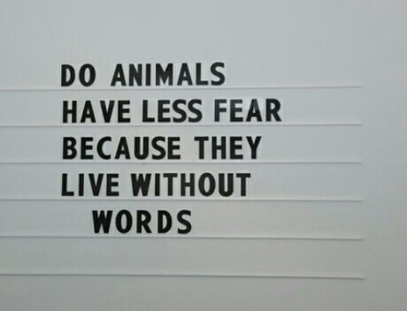 article and love animals image
