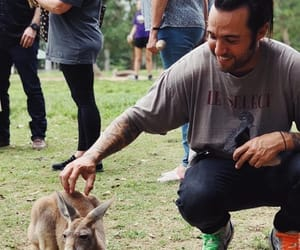 australia, fall out boy, and kangaroos image