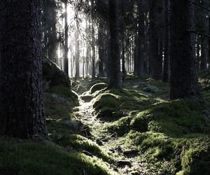 dark, magical, and forest image