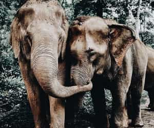 animals, elephant, and love image