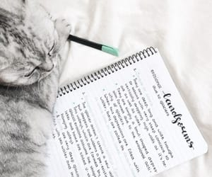 cat, studying, and kitty image