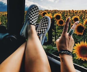 sunflower, summer, and travel image