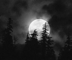 dark, forest, and moon image