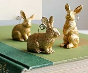 bunnies, bunny, and spring time image