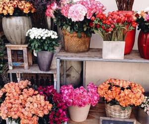 amazing, colorful, and flowers image