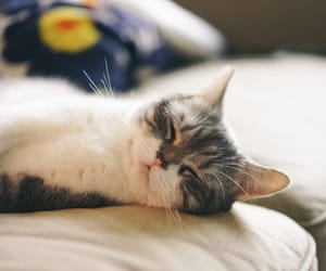 cat, kitty, and pillow image