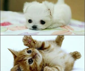 animals, kitty, and puppy image