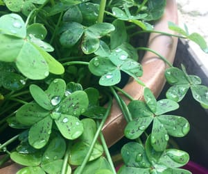 clover, drops, and green image
