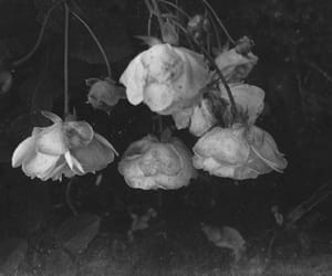 Darkness, flowers, and roses image