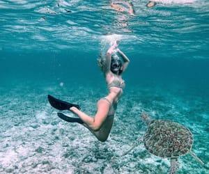 summer, animal, and bikini image