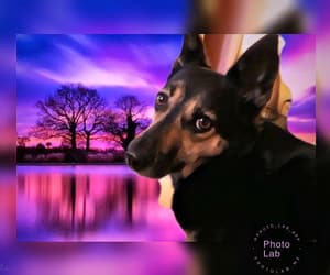 colours, dog, and dogs image