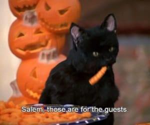 cat and salem image