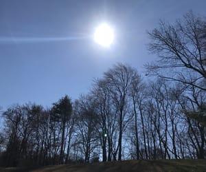 aesthetics, sun, and trees image
