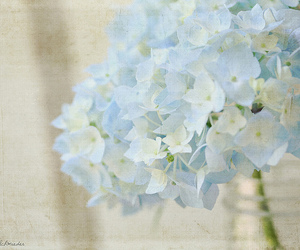 blue, spring, and texture image