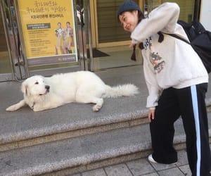 animals, korean fashion, and korean girl image