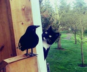 animal, cat, and fake image