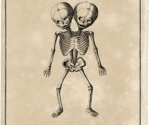 anatomical, antique, and bones image