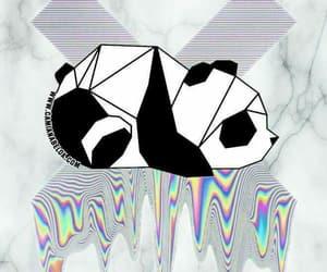 colors, panda, and fondos image