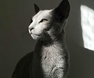 cat, light, and kitty image