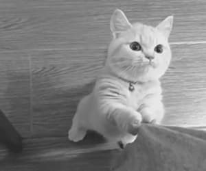 gif, cat, and cute image