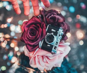 aesthetic, flower, and photography image