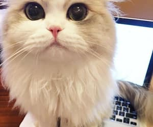 adorable, big eyes, and cute animals image