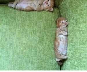 kitten, pun, and lol image
