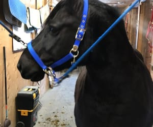 black, black horse, and horse image