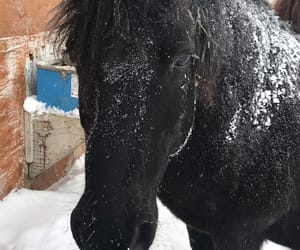 black, black horse, and hiver image