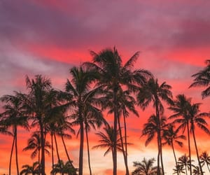 palm trees, sunset, and landscape image