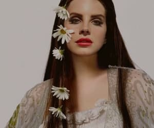 flowers, liv tyler, and daisy image