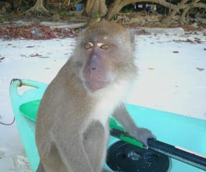 animal, Island, and monkey image