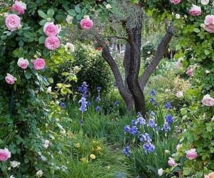 flowers, garden, and beauty image