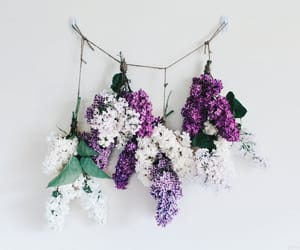 aesthetic, plants, and purple image