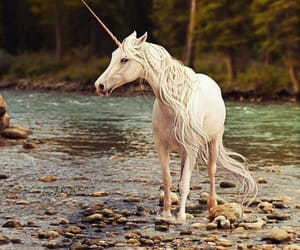 unicorn and fantasy image