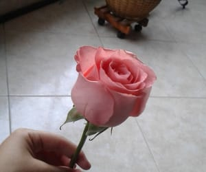present, rose, and smells image