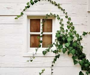 window, photography, and plants image