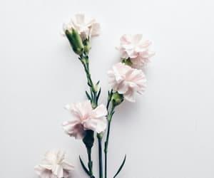 flower, minimalism, and photography image