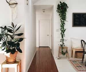 amazing, home, and plants image