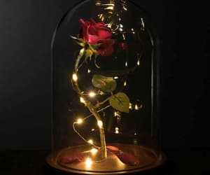 lights, red, and rose image