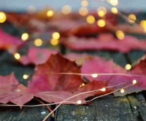autumn, leaves, and lights image