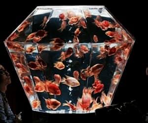 fish, theme, and aquarium image
