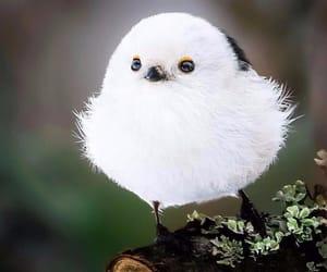 animals, bird, and white image