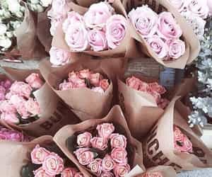 beautiful, daily, and roses image